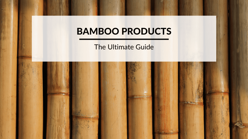 Bamboo feature image