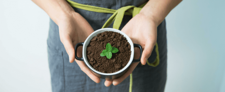 Growing MInt feature image