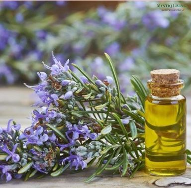 A sprig of Rosemary with blue flowers beside a small glass bottle with a cork, containing yellow essential oil