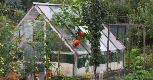Greenhouse featuring