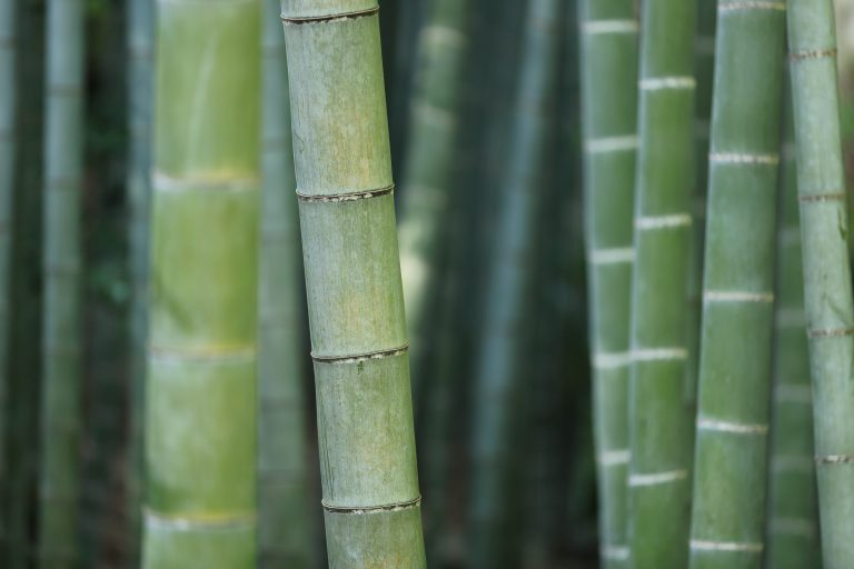 Sustainable Materials: Green Bamboo Stems