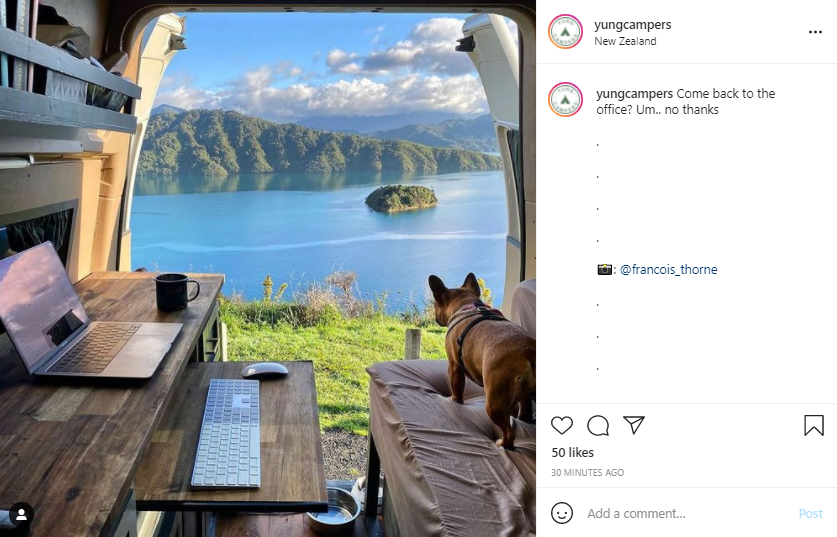 Living in a Van - Dog and Laptop - Screenshot from Instagram