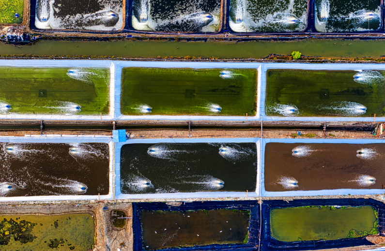 wild-caught fish - stock image from Canva of ponds on a fish farm