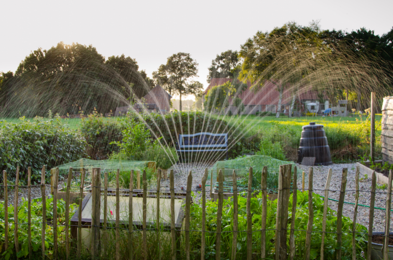 Living off the grid - free image from canva of a home vegetable garden being irrigated from a hose and sprinkler setup