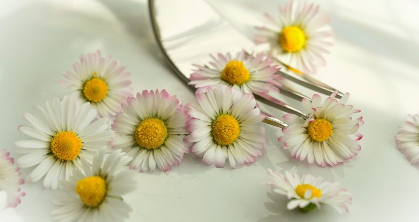 Royalty free image of Daisys from Pixabay by Conger Design